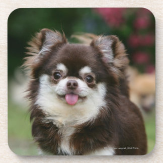 Long Haired Chihuahua Headshot 1 Coaster