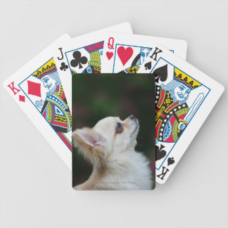 Long Haired Chihuahua Headshot 2 Card Deck