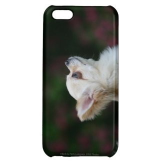 Long Haired Chihuahua Headshot 2 iPhone 5C Cover