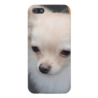 Long Haired Chihuahua iPhone 5 Case