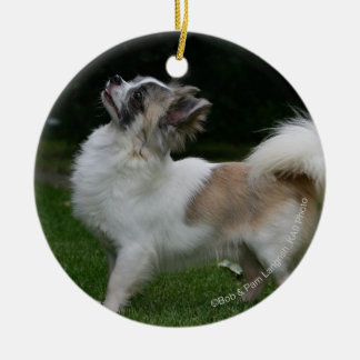 Long Haired Chihuahua Looking at Camera Christmas Ornament