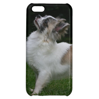 Long Haired Chihuahua Looking at Camera iPhone 5C Cases