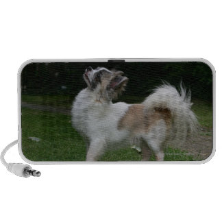Long Haired Chihuahua Looking at Camera iPhone Speakers