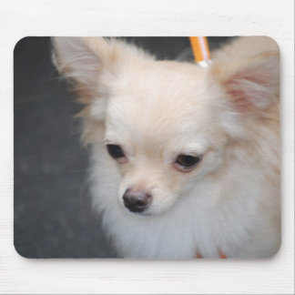 Long Haired Chihuahua Mouse Pad