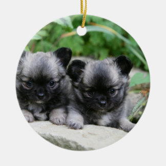 Long Haired Chihuahua Puppies Christmas Ornament