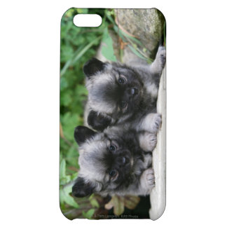 Long Haired Chihuahua Puppies iPhone 5C Covers