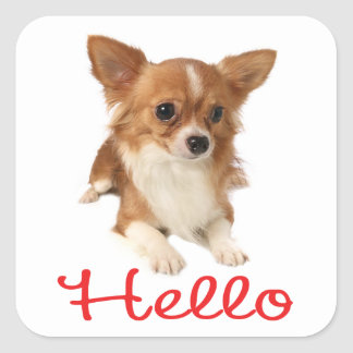 Long Haired Chihuahua Puppy Dog Red Hello Square Sticker