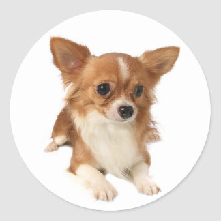 Long Haired Chihuahua Puppy Dog Stickers / Seals