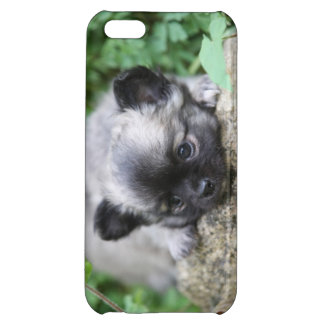 Long Haired Chihuahua Puppy iPhone 5C Covers
