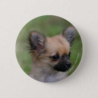 Long Haired Chihuahua Puppy Looking at Camera 6 Cm Round Badge