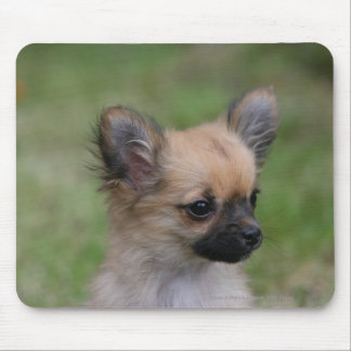 Long Haired Chihuahua Puppy Looking at Camera Mouse Pad