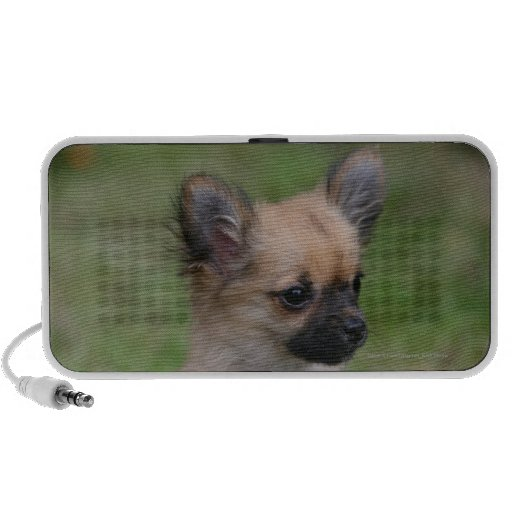 Long Haired Chihuahua Puppy Looking at Camera Notebook Speakers