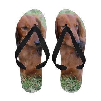 Long Haired Dachshund Flip Flops