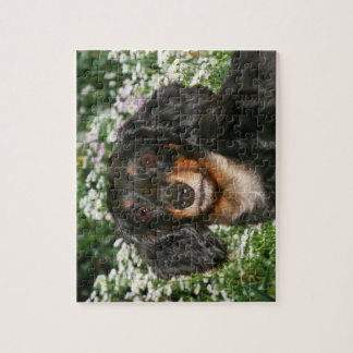 Long haired dachshund jigsaw puzzle