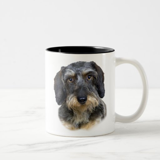 Long Haired Dachshund Portrait Gifts Coffee Mugs