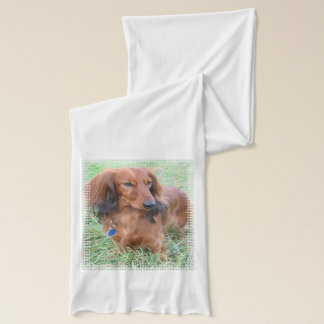 Long Haired Dachshund Scarf