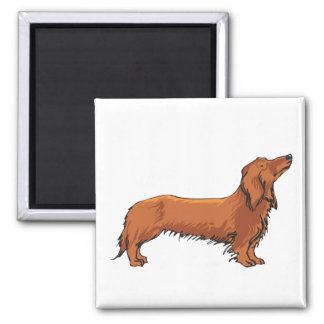 Long Haired Dachshund Square Magnet