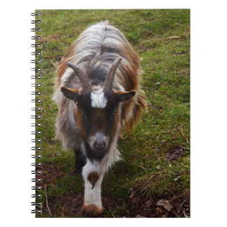 Long Haired Goat. Notebook