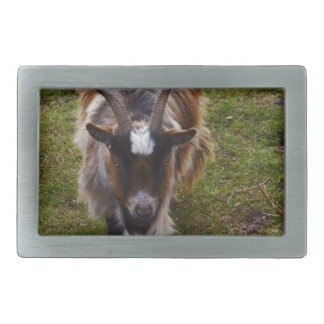 Long Haired Goat. Rectangular Belt Buckles