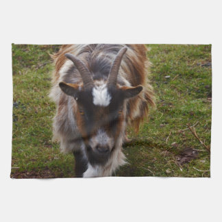 Long Haired Goat. Tea Towel