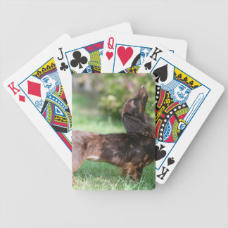 Long-haired Miniature Dachshund 1 Bicycle Playing Cards