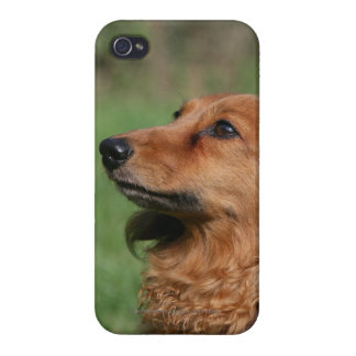Long-haired Miniature Dachshund 2 Case For iPhone 4