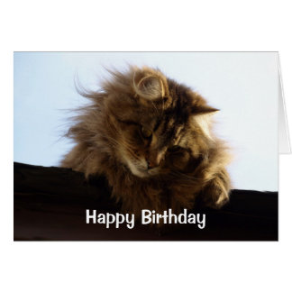 Long-Haired Tabby Cat Birthday Card