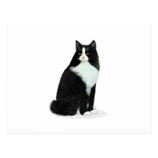 Long Haired Tuxedo Cat Postcard