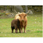 Long Horned Cattle Female And Her Young Standing Photo Sculpture