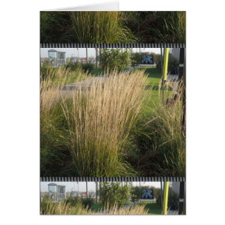 Long Matured Grass giveaway return gifts for KIDS Cards