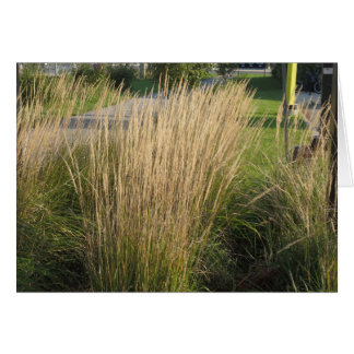 Long Matured Grass giveaway return gifts for KIDS Greeting Card