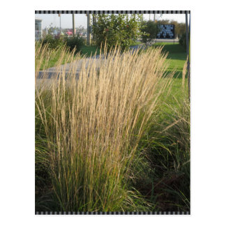 Long Matured Grass giveaway return gifts for KIDS Postcards