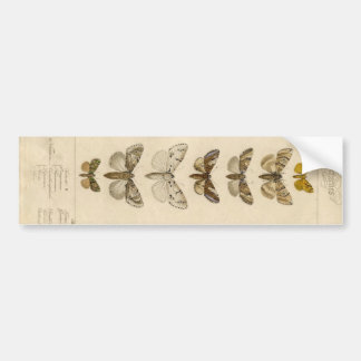 Long Moth Specimen Sticker Bumper Sticker
