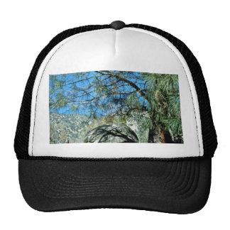 Long-Needled Pine Casting Shadows Hat