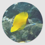 Long Nose Butterfly Fish Round Stickers