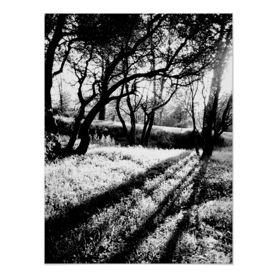 Long Shadows Black and White Poster