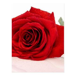 Long Stem Red Rose Postcard