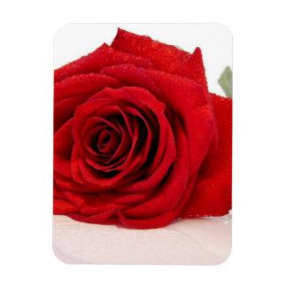 Long Stem Red Rose Premium Magnet Rectangle Magnets