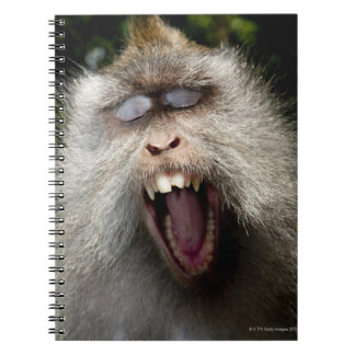 Long-tailed macaques (Macaca fascicularis) Spiral Notebook