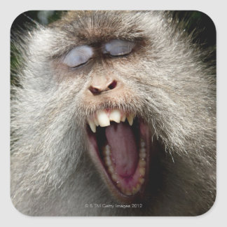 Long-tailed macaques (Macaca fascicularis) Square Sticker