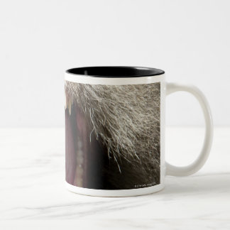 Long-tailed macaques (Macaca fascicularis) Two-Tone Coffee Mug
