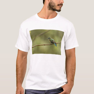 Long-tailed Sylph Aglaiocercus kingi) female, T-Shirt