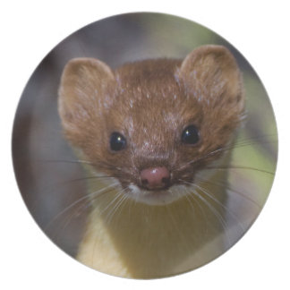 Long-tailed Weasel Plate