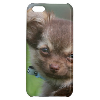 Longhaired Chihuahua Puppy Looking at Camera Case For iPhone 5C