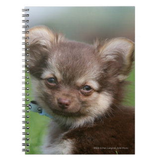 Longhaired Chihuahua Puppy Looking at Camera Notebooks