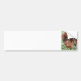 Longhaired Dachshund Bumper Sticker