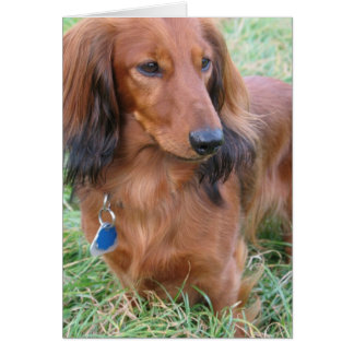 Longhaired Dachshund Greeting Card