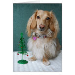 Longhaired dachshund sitting on a wicker table greeting card