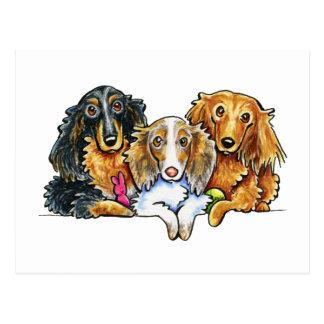 Longhaired Dachshund Trio Postcard