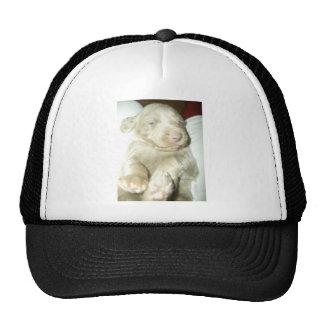 Longhaired Pup Weimaraner Mesh Hat